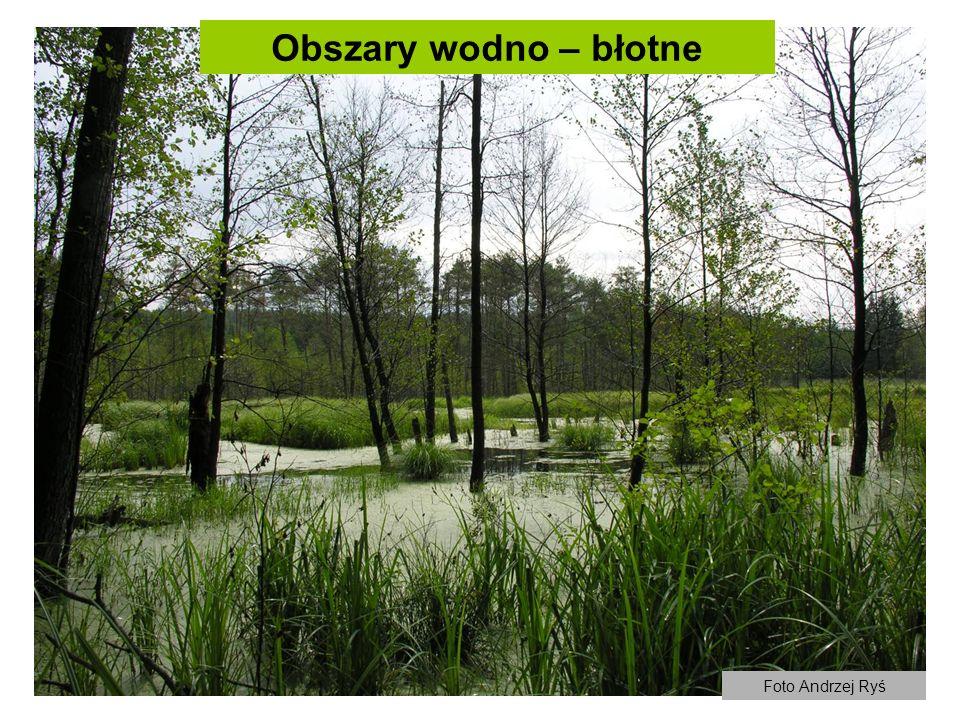 Obszary wodno – błotne Foto Andrzej Ryś