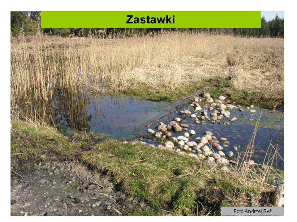 Zastawki Foto Andrzej Ryś