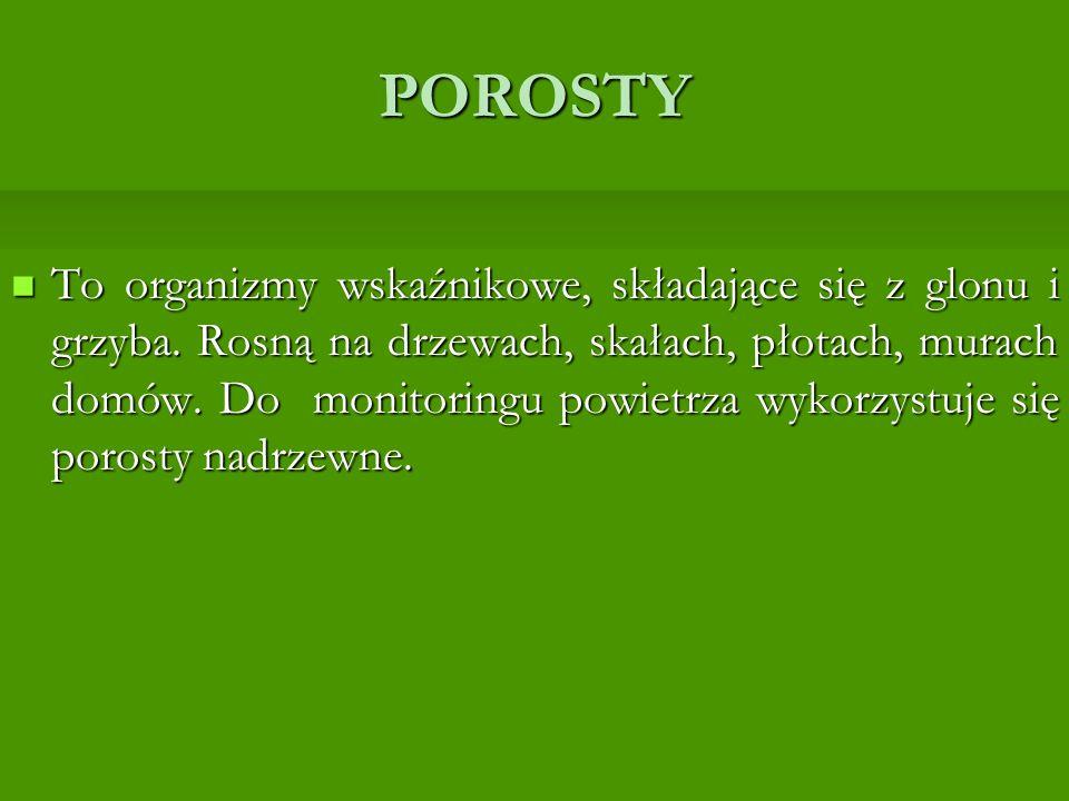 POROSTY