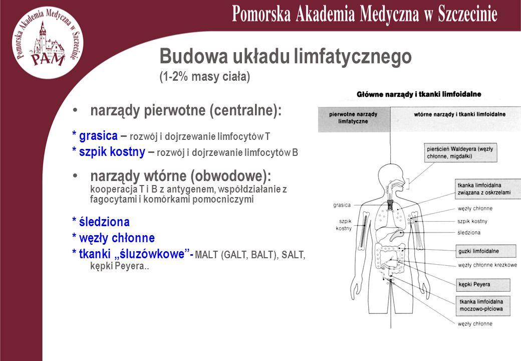 Budowa układu limfatycznego (1-2% masy ciała)