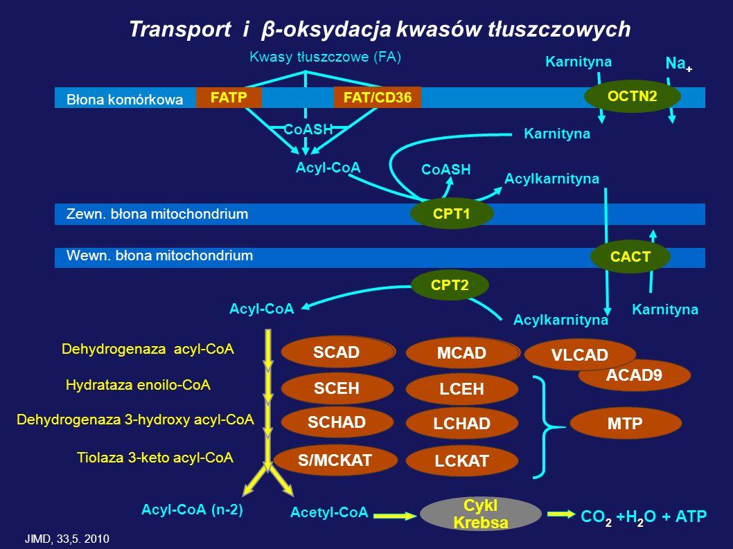 Transport i β-oksydacja kwasów tłuszczowych
