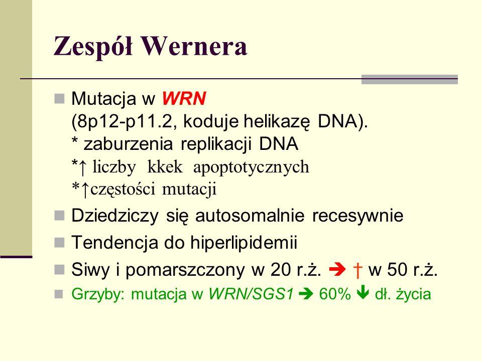 Zespół Wernera