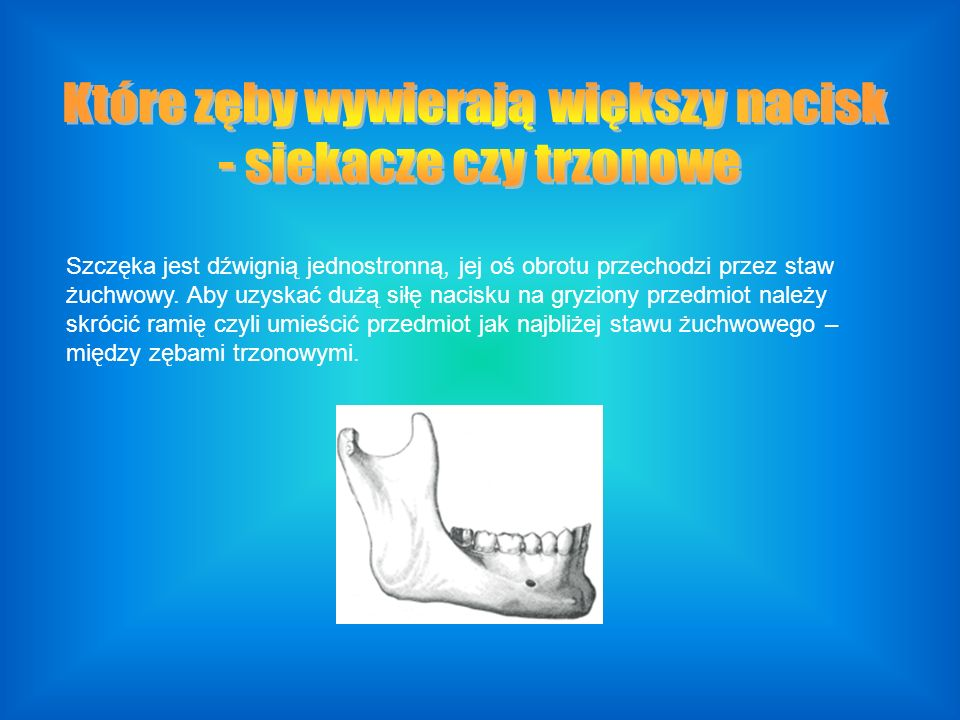 Które zęby wywierają większy nacisk - siekacze czy trzonowe