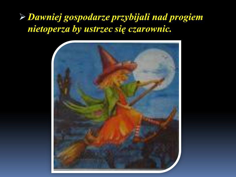 Dawniej gospodarze przybijali nad progiem nietoperza by ustrzec się czarownic.
