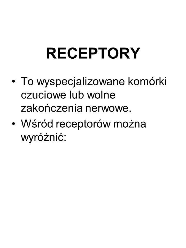 RECEPTORY To wyspecjalizowane komórki czuciowe lub wolne zakończenia nerwowe.