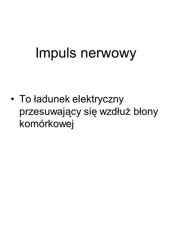 Impuls nerwowy To ładunek elektryczny przesuwający się wzdłuż błony komórkowej