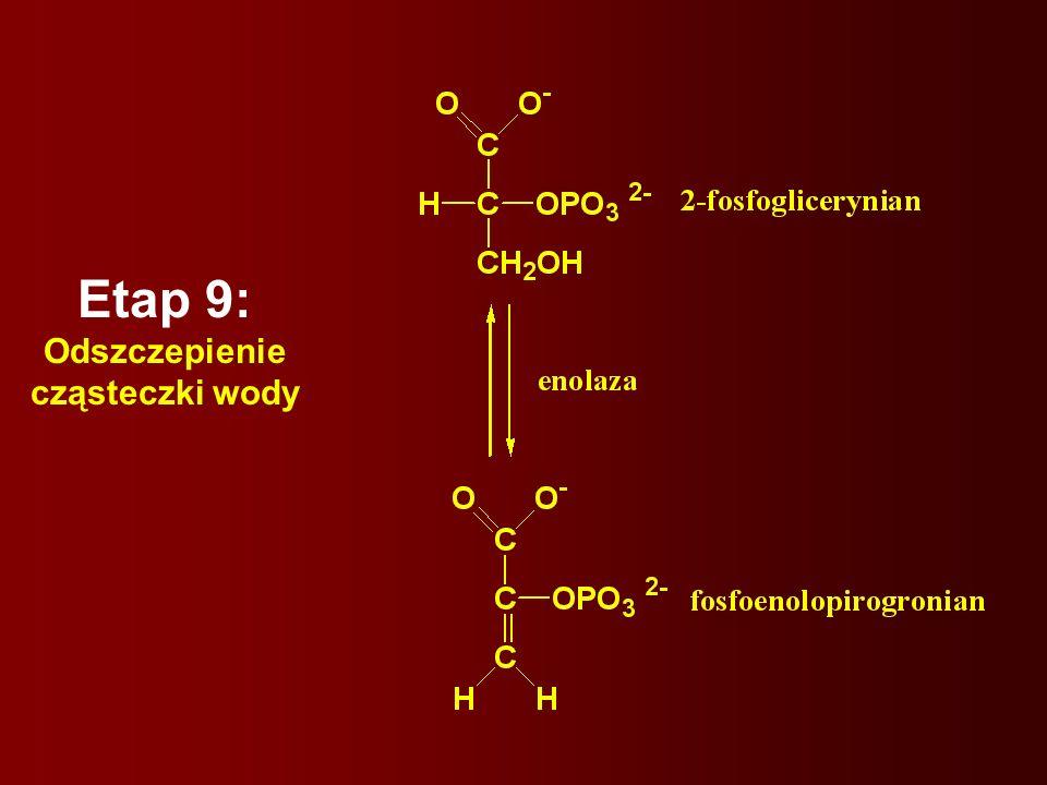 Etap 9: Odszczepienie cząsteczki wody