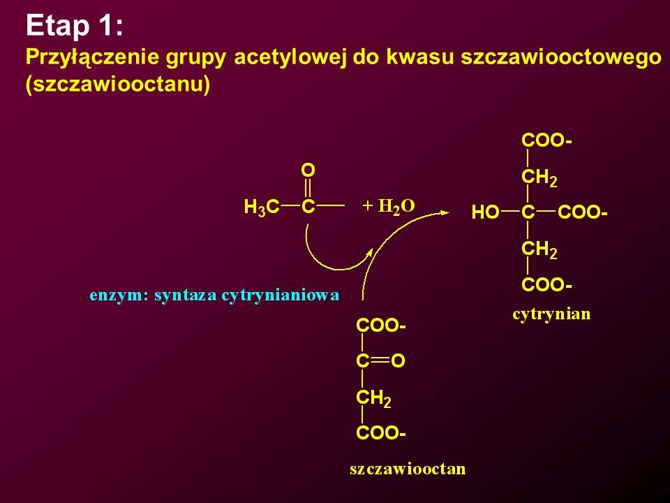 Etap 1: Przyłączenie grupy acetylowej do kwasu szczawiooctowego