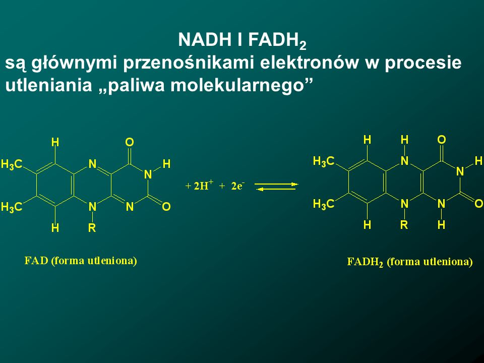 """NADH I FADH2 są głównymi przenośnikami elektronów w procesie utleniania """"paliwa molekularnego"""