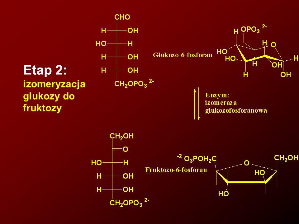 Etap 2: izomeryzacja glukozy do fruktozy