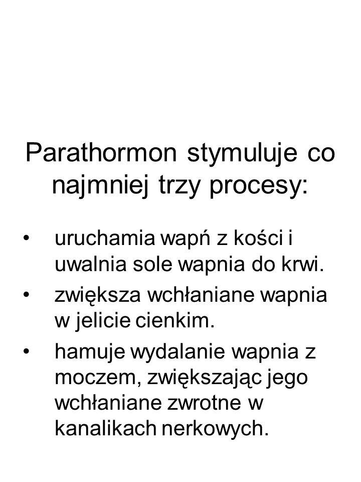 Parathormon stymuluje co najmniej trzy procesy: