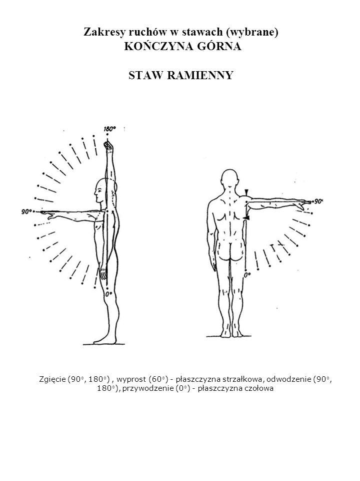 Zakresy ruchów w stawach (wybrane) KOŃCZYNA GÓRNA STAW RAMIENNY