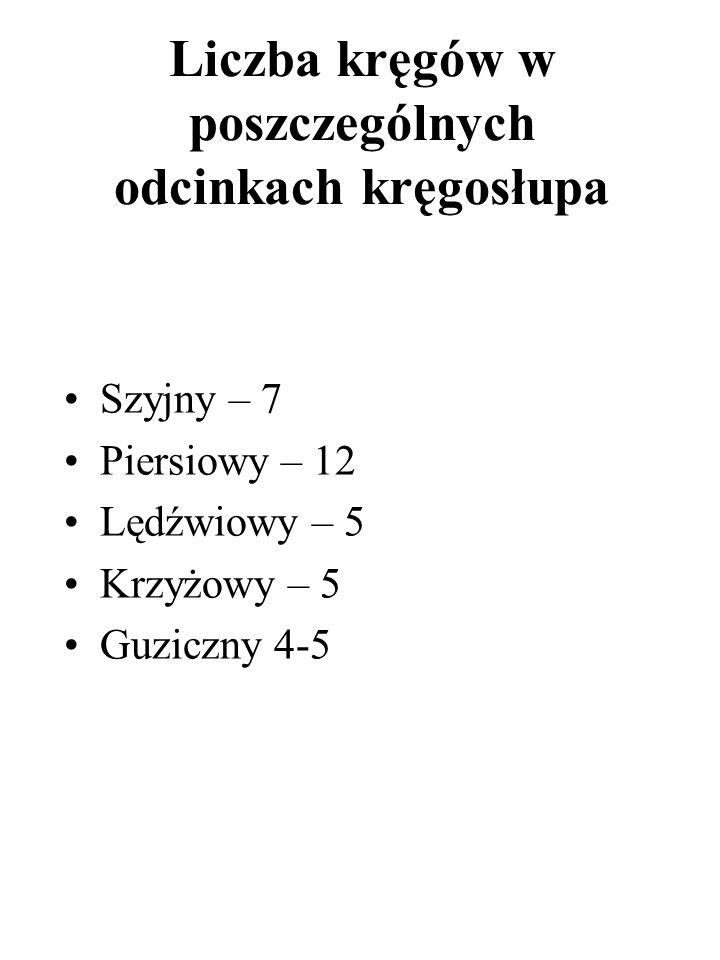 Liczba kręgów w poszczególnych odcinkach kręgosłupa