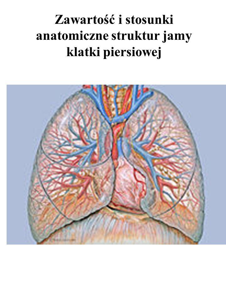 Zawartość i stosunki anatomiczne struktur jamy klatki piersiowej