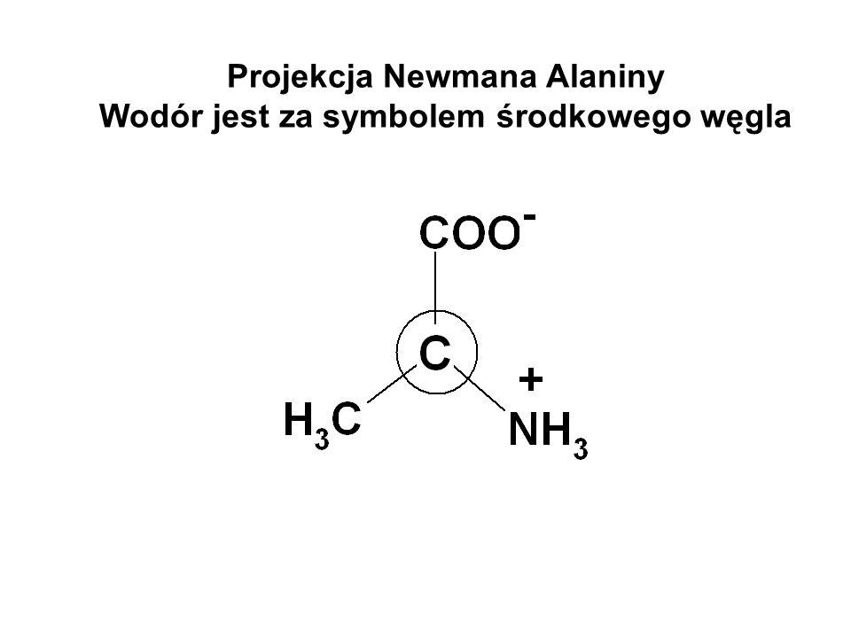 Projekcja Newmana Alaniny Wodór jest za symbolem środkowego węgla
