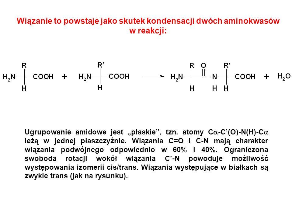 Wiązanie to powstaje jako skutek kondensacji dwóch aminokwasów