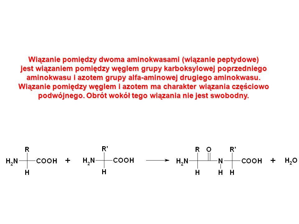 Wiązanie pomiędzy dwoma aminokwasami (wiązanie peptydowe)