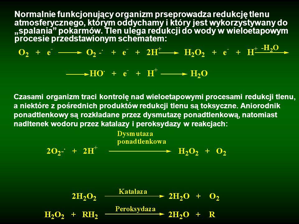 """Normalnie funkcjonujący organizm prseprowadza redukcję tlenu atmosferycznego, którym oddychamy i który jest wykorzystywany do """"spalania pokarmów. Tlen ulega redukcji do wody w wieloetapowym procesie przedstawionym schematem:"""