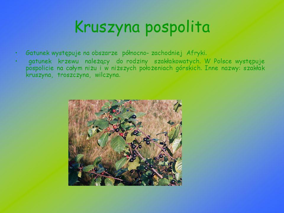 Kruszyna pospolita Gatunek występuje na obszarze północno- zachodniej Afryki.