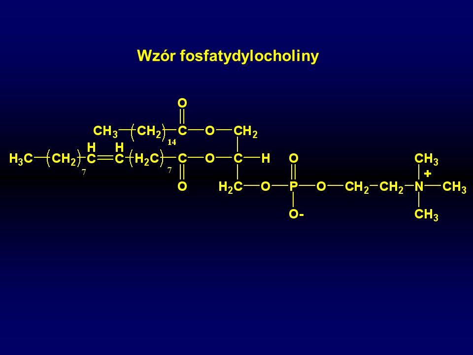 Wzór fosfatydylocholiny