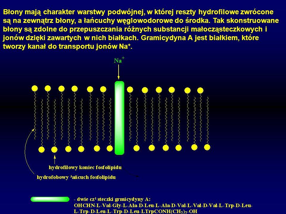 Błony mają charakter warstwy podwójnej, w której reszty hydrofilowe zwrócone są na zewnątrz błony, a łańcuchy węglowodorowe do środka.