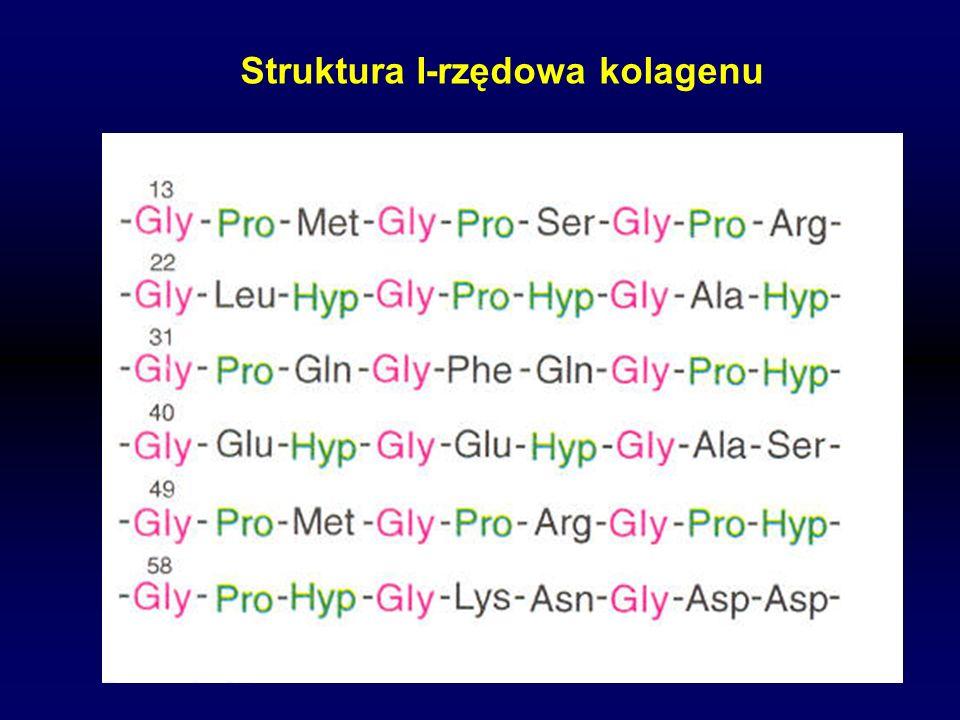 Struktura I-rzędowa kolagenu