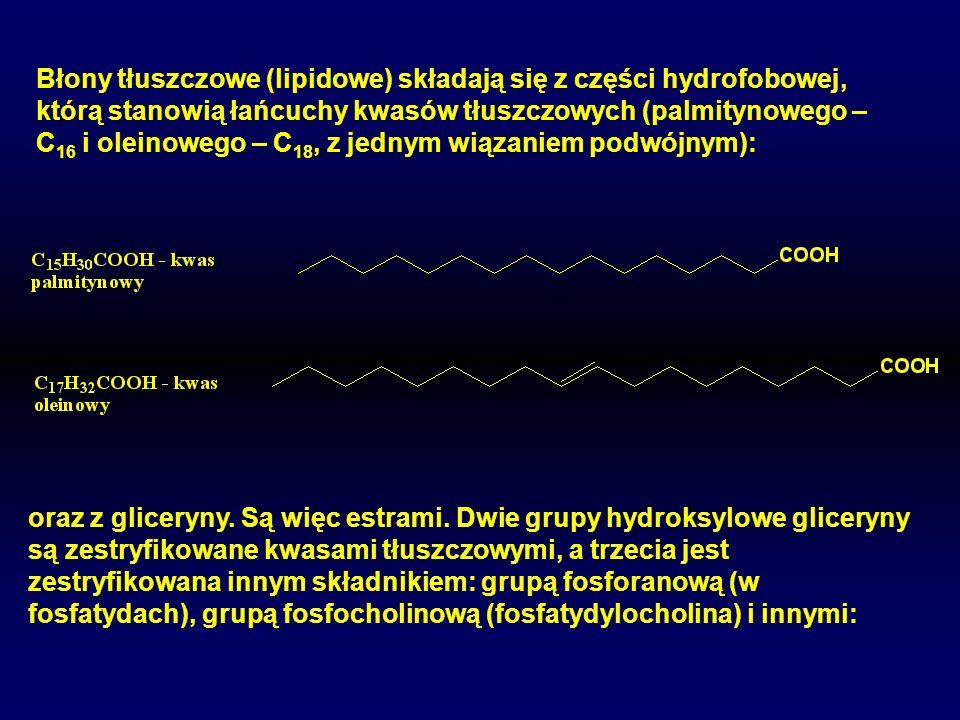 Błony tłuszczowe (lipidowe) składają się z części hydrofobowej, którą stanowią łańcuchy kwasów tłuszczowych (palmitynowego – C16 i oleinowego – C18, z jednym wiązaniem podwójnym):