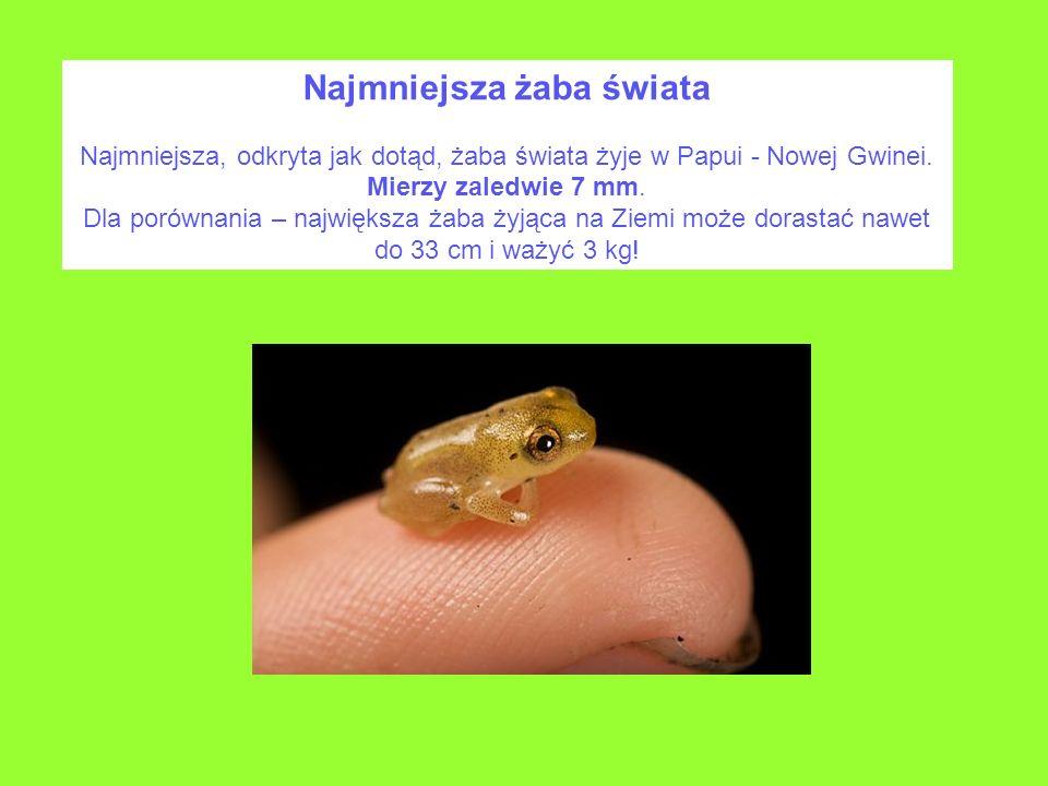 Najmniejsza żaba świata