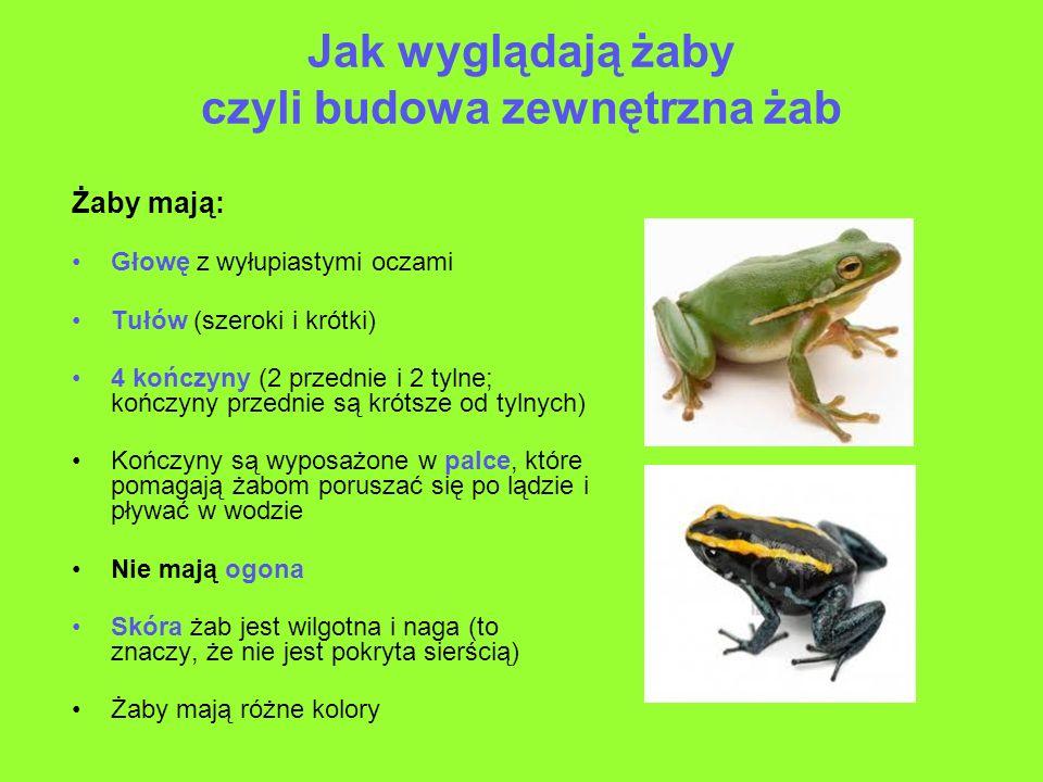 Jak wyglądają żaby czyli budowa zewnętrzna żab