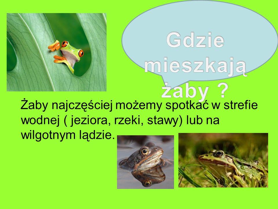 Gdzie mieszkają żaby .