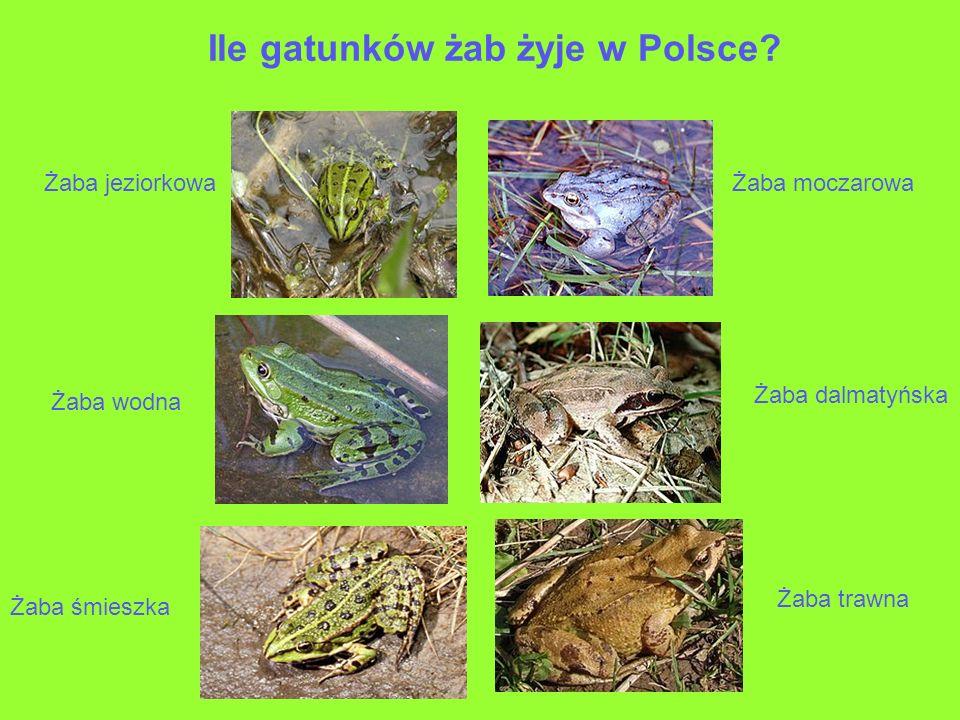 Ile gatunków żab żyje w Polsce