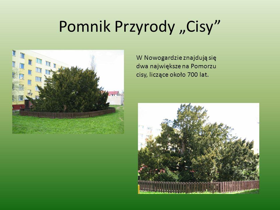"""Pomnik Przyrody """"Cisy"""