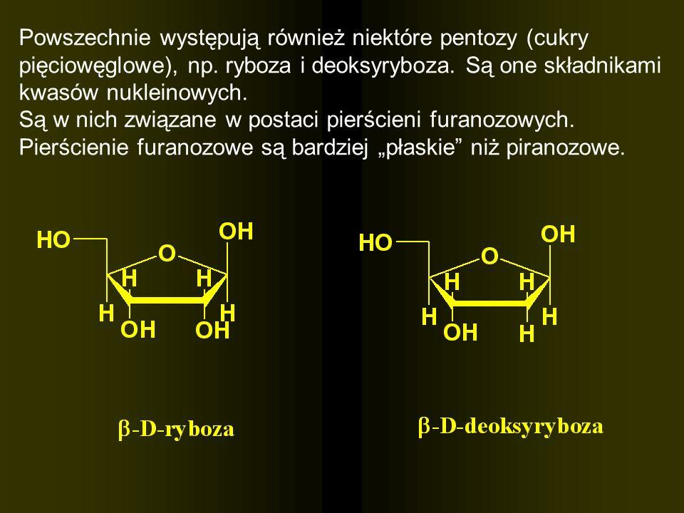 Powszechnie występują również niektóre pentozy (cukry pięciowęglowe), np. ryboza i deoksyryboza. Są one składnikami kwasów nukleinowych.