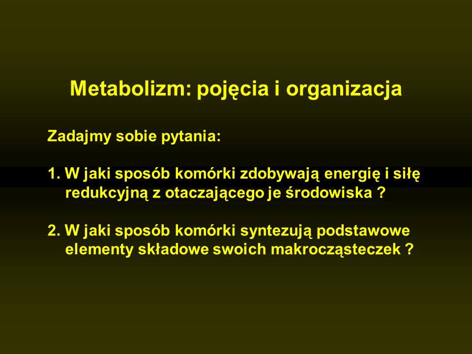 Metabolizm: pojęcia i organizacja