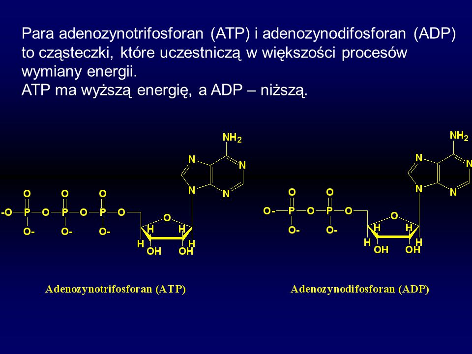 Para adenozynotrifosforan (ATP) i adenozynodifosforan (ADP)