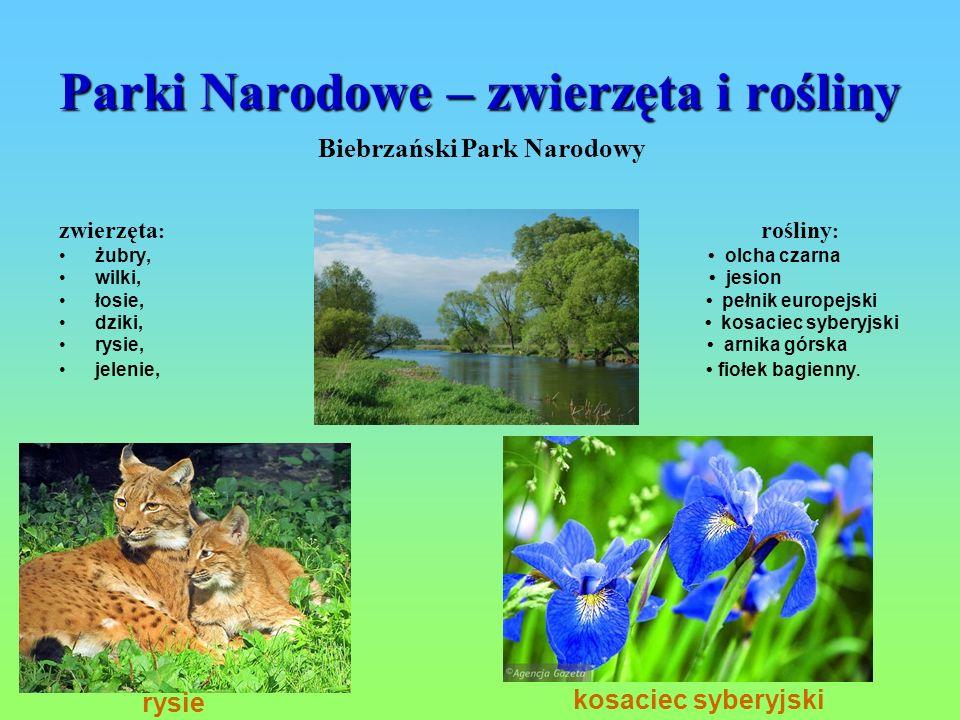 Parki Narodowe – zwierzęta i rośliny