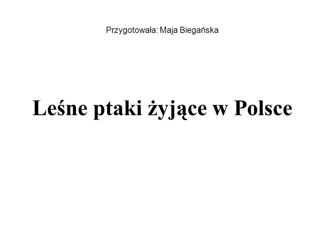 Przygotowała: Maja Biegańska