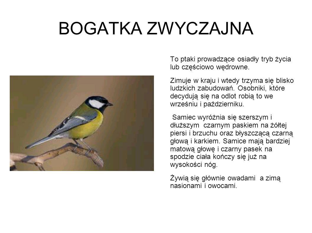 BOGATKA ZWYCZAJNA To ptaki prowadzące osiadły tryb życia lub częściowo wędrowne.