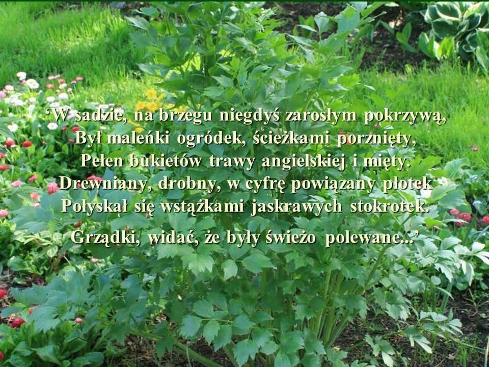 'W sadzie, na brzegu niegdyś zarosłym pokrzywą, Był maleńki ogródek, ścieżkami porznięty, Pełen bukietów trawy angielskiej i mięty.