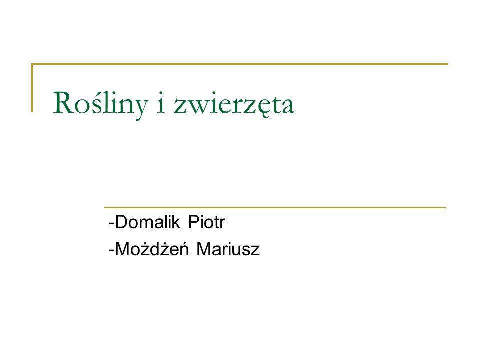 -Domalik Piotr -Możdżeń Mariusz