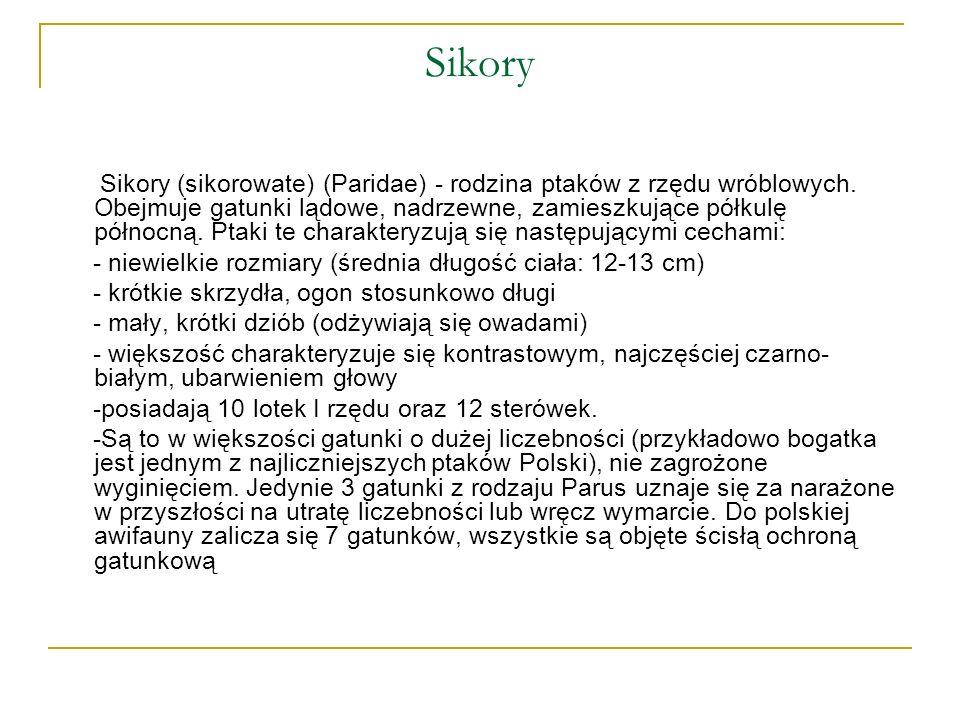 Sikory