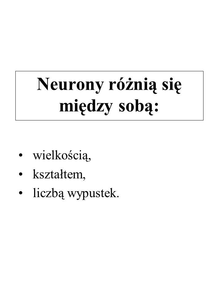 Neurony różnią się między sobą: