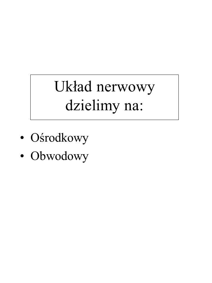 Układ nerwowy dzielimy na: