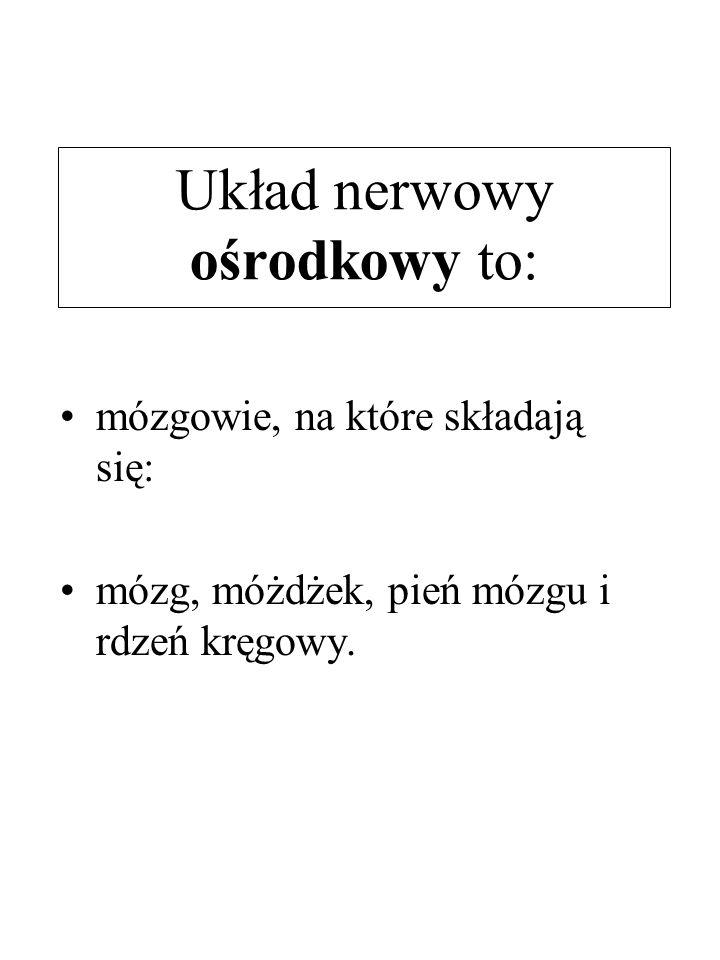 Układ nerwowy ośrodkowy to: