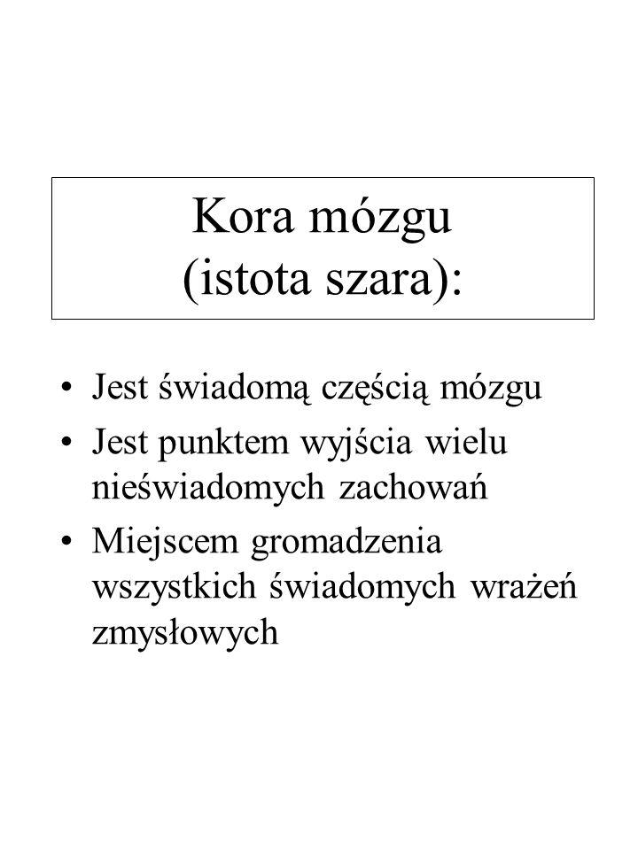 Kora mózgu (istota szara):