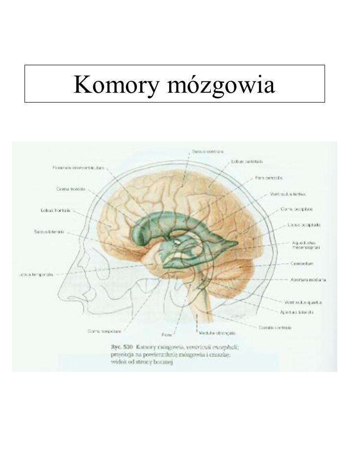 Komory mózgowia
