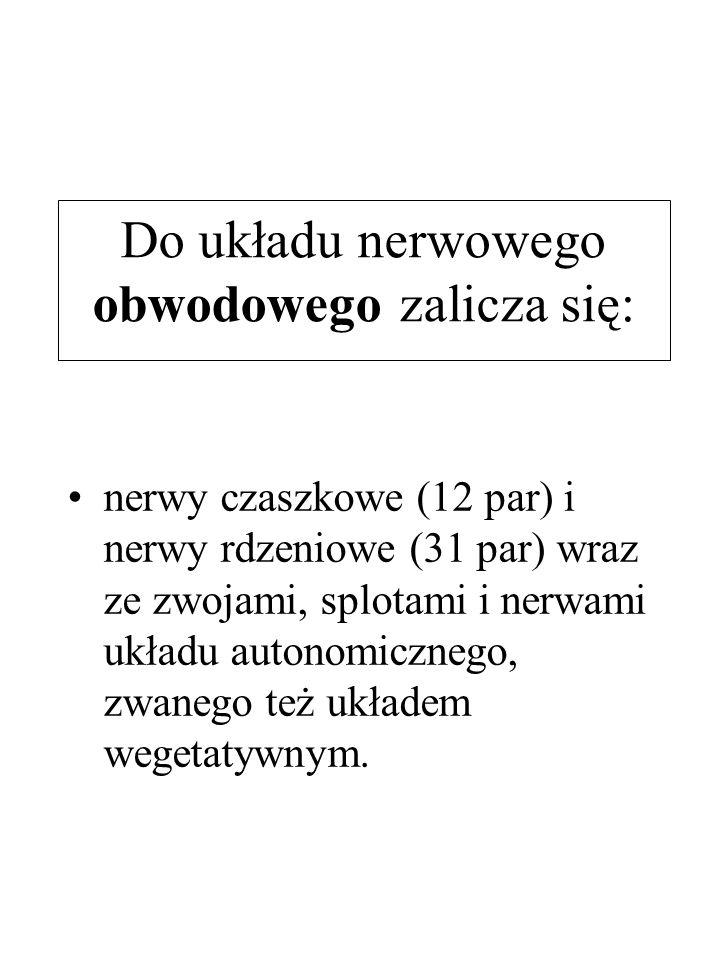 Do układu nerwowego obwodowego zalicza się: