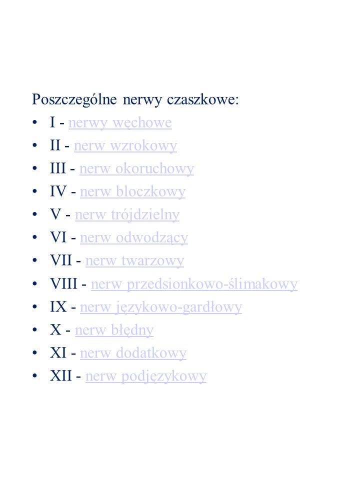 Poszczególne nerwy czaszkowe: