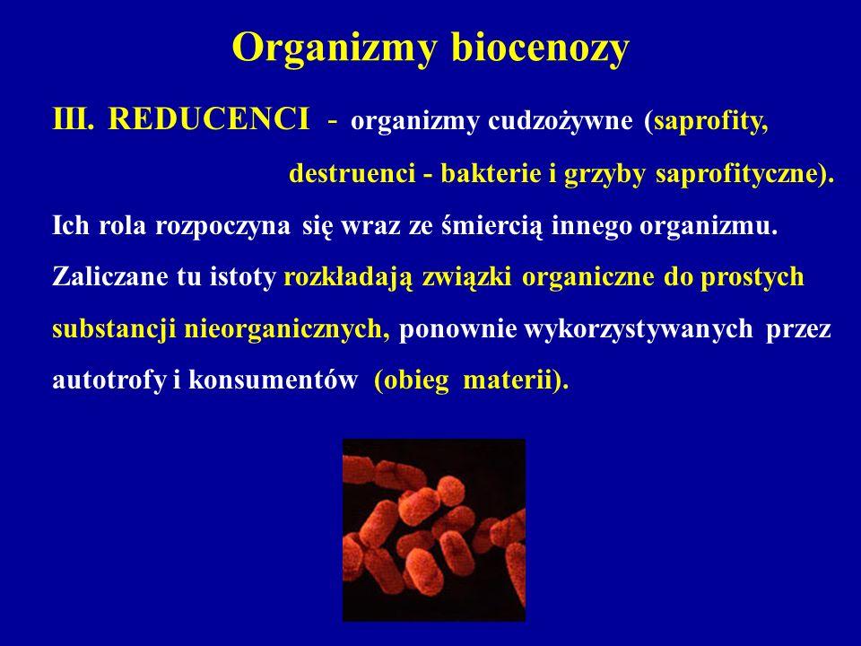 Organizmy biocenozy III. REDUCENCI - organizmy cudzożywne (saprofity,