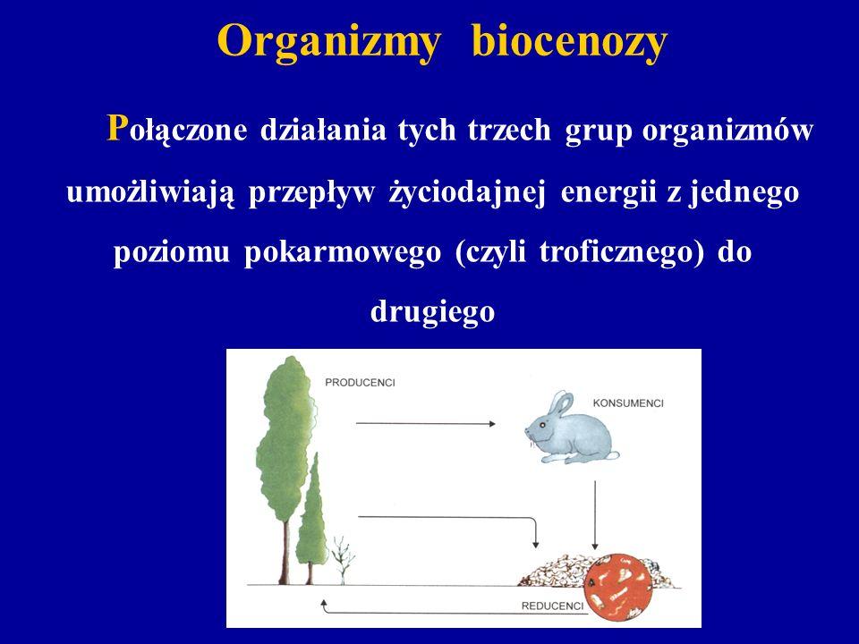 Organizmy biocenozy umożliwiają przepływ życiodajnej energii z jednego